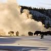 Bisen keeping warm  Yellowstone in Winter