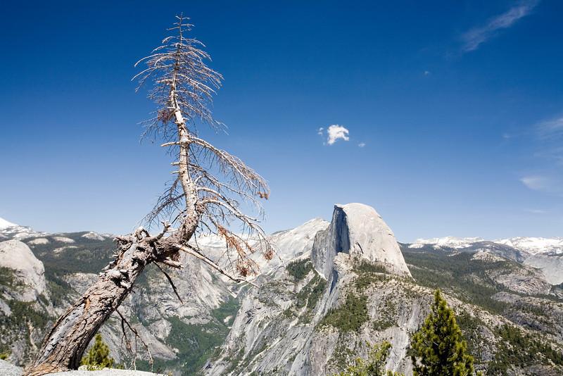 Dead Tree and Half Dome Yosemite;