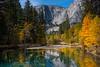 Brillance And Reflections Of Aspens - Lower Yosemite Valley, Yosemite National Park, California