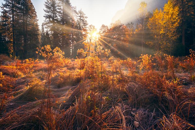 Sunburst Morning In Cooks Meadow - Lower Yosemite Valley, Yosemite National Park, CA