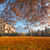Half Dome Framed With Autumn Colors - Lower Yosemite Valley, Yosemite National Park, CA