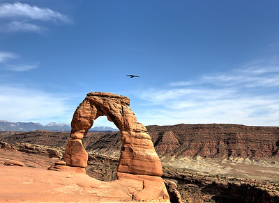 Raven over Delicate Arch