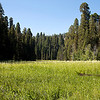 Crescent Meadow - Sequoia National Park - CA