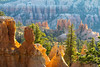 First Light Hoodoos and Trees Bryce Canyon National Park.