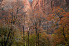 Fall Color in Zion National Park
