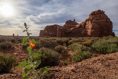 Orange Flower in Red Rock Country