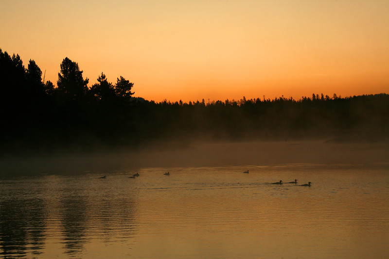 Ducks At Dawn - Grand Teton National Park - WY