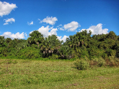 Debary, Florida. © Nora Kramer Photography, 2013.