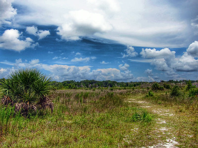 Aripeka Sand Hills, Florida