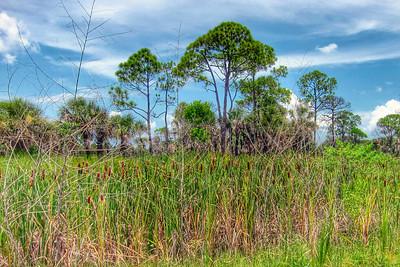 Salt Springs State Park, Florida