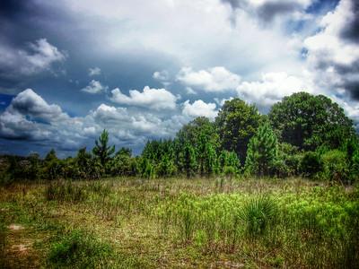 Aripeka Sandhills, Florida