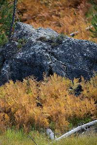 Fall Ferns I