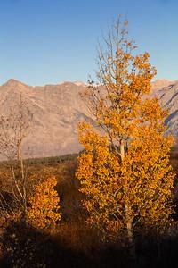 Fall Sunrise II