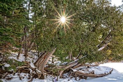 Tettegouche Cedar Sunburst