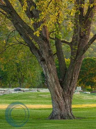 Tree Study, Winona, Mn