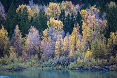 Fall Lake Shore