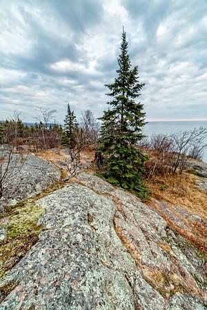 Pine Tree on Palisade Head