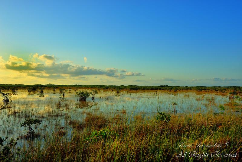 Everglades National Park.  South Florida.