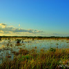 Everglades National Park.  South Florida.