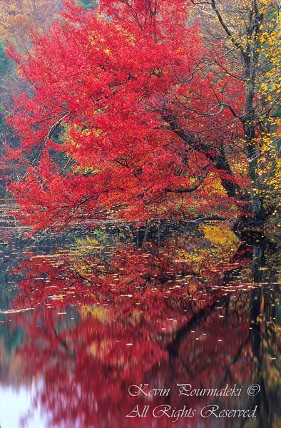 Autumn in  Connecticut.