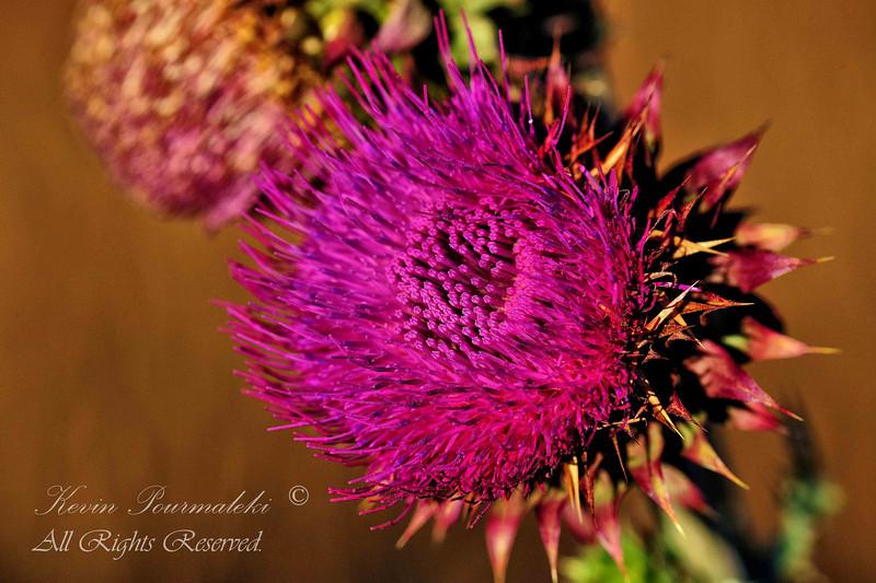 Wild Flower.  Grand Teton National Park.
