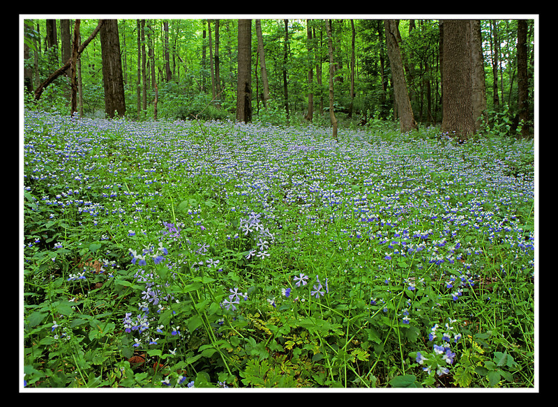Rise and Shine!<br /> <br /> The blues and purples were out on this lonely morning in a new (to me) area of woods.<br /> <br /> Mamiya RB67, 50mm