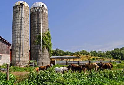 Rural Western Wisconsin