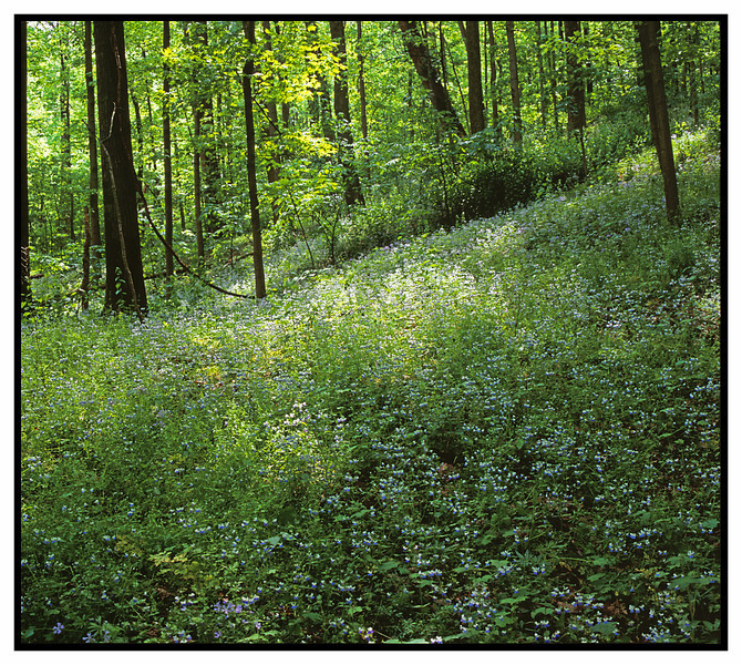 MORE WILDFLOWERS!<br /> <br /> <br /> <br /> Mamiya RB67, 90mm