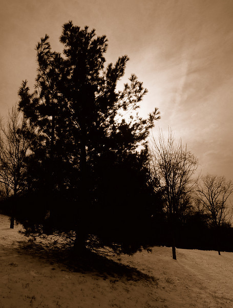 A sepia version of this originally color shot taken just after a snow storm near school.<br /> <br /> Konica T3, 24mm