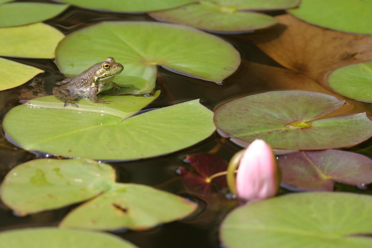 Garden pond in front yard.