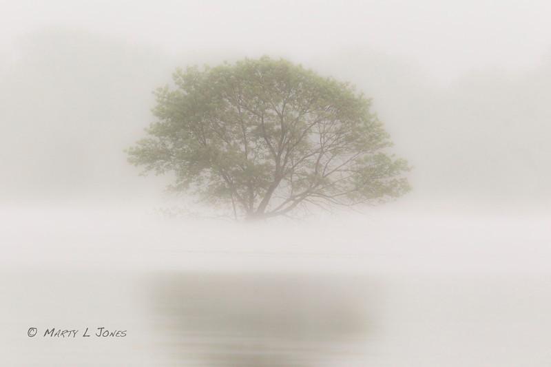 Submerged Fog Tree, Wabashiki FWA, Terre Haute, Indiana, May 14, 2011.