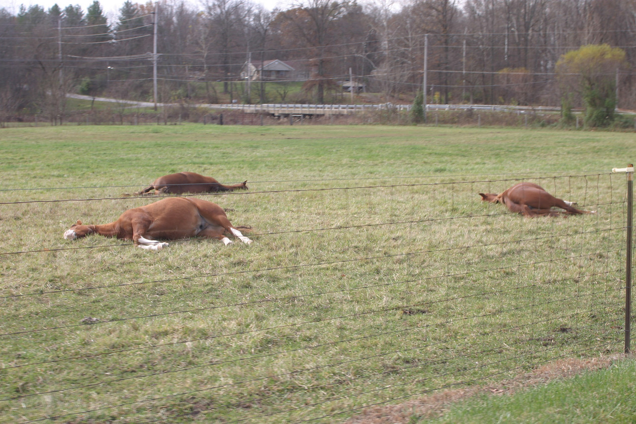 Horses taking a nap near Limberlost Hills.