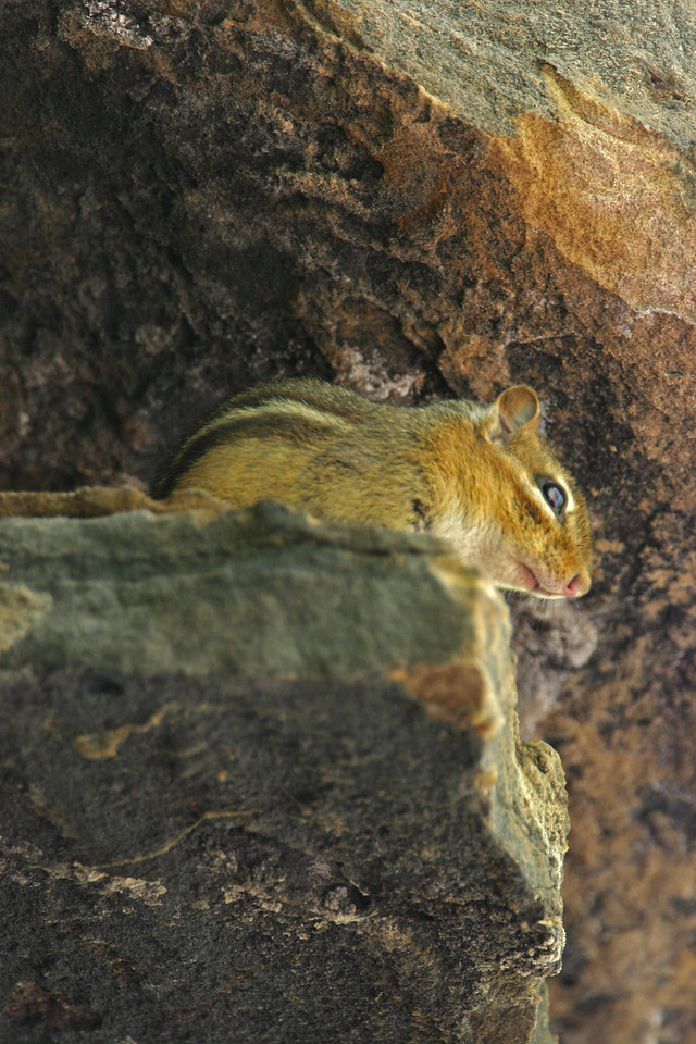 Chipmunk at Portland Arch National Landmark, Fountain County, Indiana.
