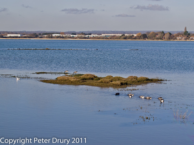 08 February 2011. Southmoor and Langstone from the north of the Oysterbeds. Copyright Peter Drury 2011