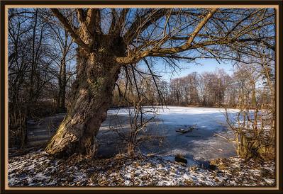 Alte Weide am gefrorenen See