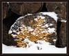 Baumstamm mit Pilz und Schnee