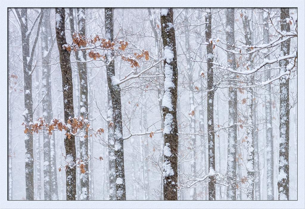 Schneefall2 im Buchenwald