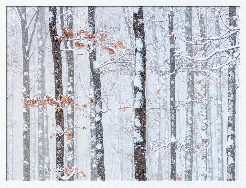 Schneefall im Buchenwald