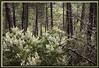 Frühlingsblüte im mediterranen Wald