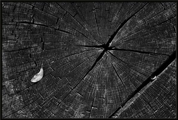 Weißes Blatt auf schwarzem Stumpf