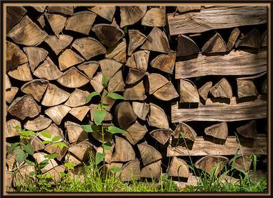 Holzscheit im Wald