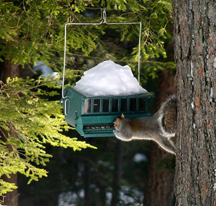 Squirrel proof feeder outwitted