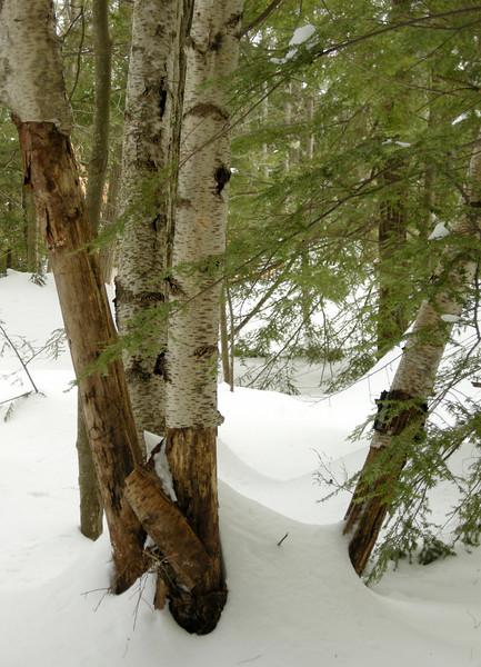 2011 Endless Winter