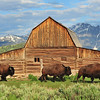 """Grand Tetons, Wyoming. I have a small narrow horizontal image of the """"Three Buffalo"""" on canvas.<br /> This image can be found on the walls of the Park City Medical Center."""