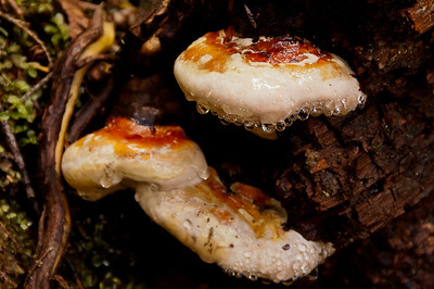 Morning rainfall hangs off a series of fungus in an urban park
