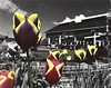 Greenbank Tulips I