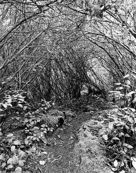 Winterhawk Trail  I