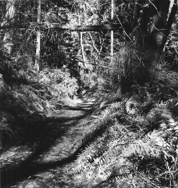 Raider Creek Ferns
