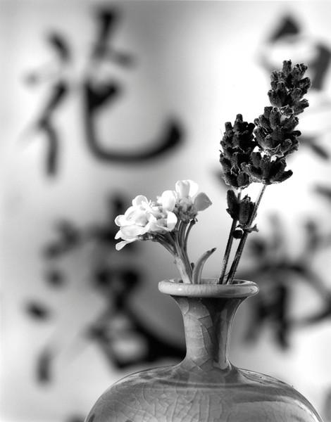 "Lavender ""Hua"""