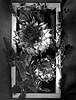 Artichoke Mort  II